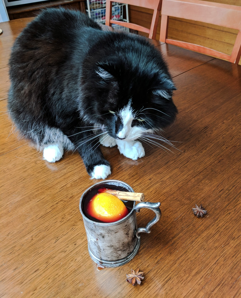 Cat helps with mulled wine