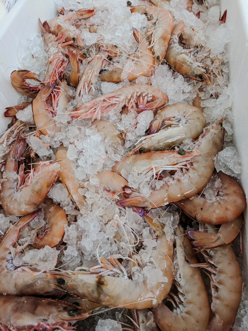 Fresh Spencer Gulf Prawns